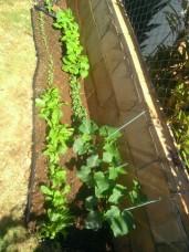 So many cute little seedlings