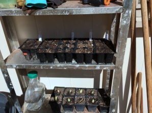 Seedling station
