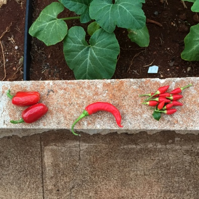 Three kinds of red hot pepper all in a row