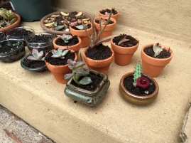 So many baby succulents...I had to give those away too!