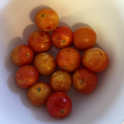 These cherry tomatoes ended up a strange color but they sure were tasty