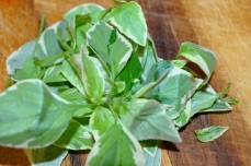 Variegated Basil - so pretty and flavorful!