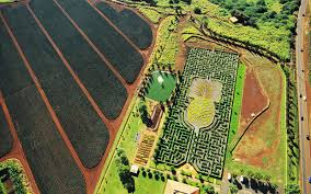 Pineapple maze at Dole Plantation in central Oahu